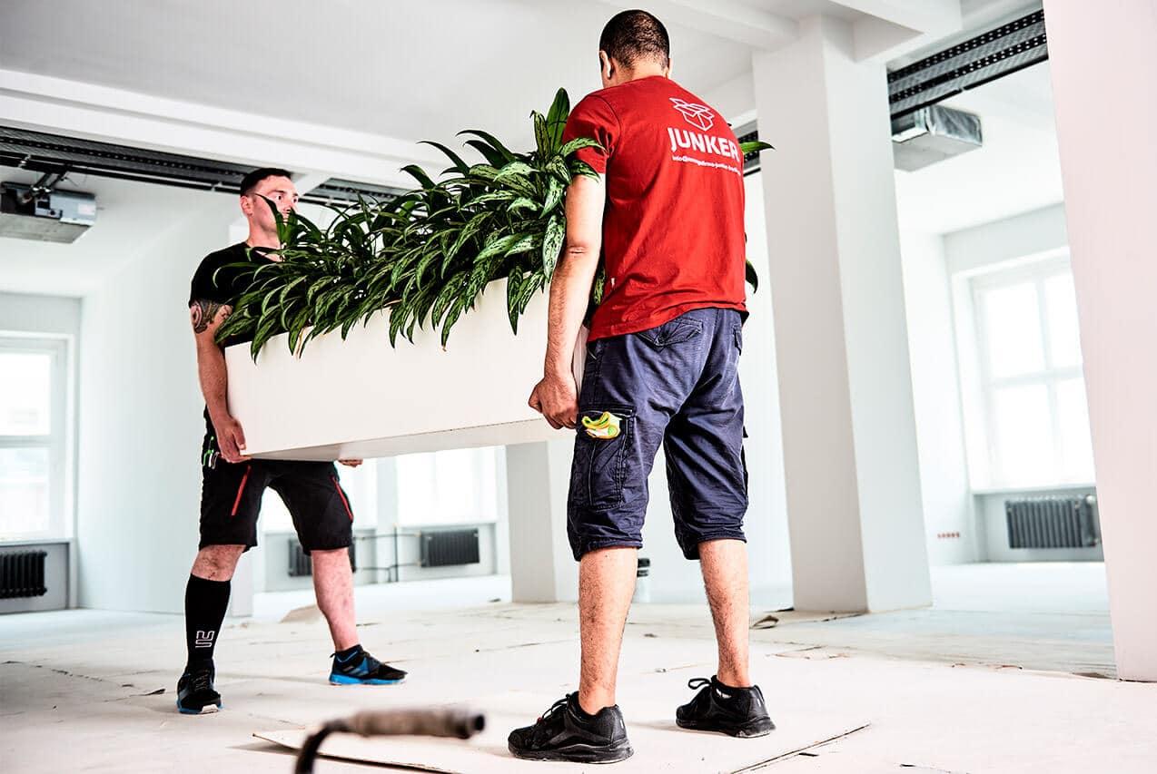 Junker Umzüge Berlin - Büroumzug - Mitarbeiter tragen Büro-Pflanzen